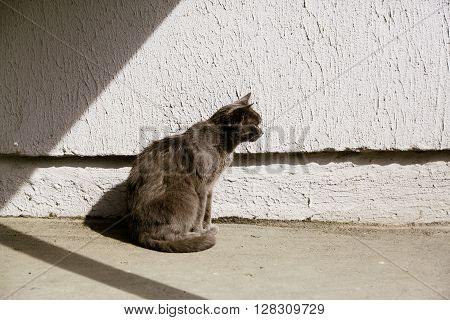 Beautiful calm grey stray cat sitting in the sun, side view , copy space