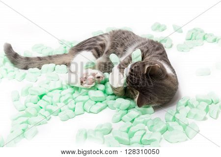 little grey tiger cat playing with packing chips against white background