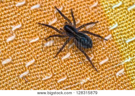 spider sitting on orange fabric close-up macro shot.
