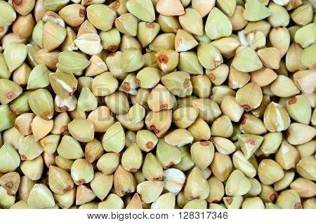 Close up background of green buckwheat closeup