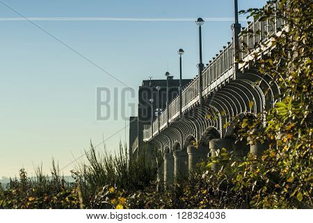 Kincardine Bridge emerging from surrounding trees and bushes