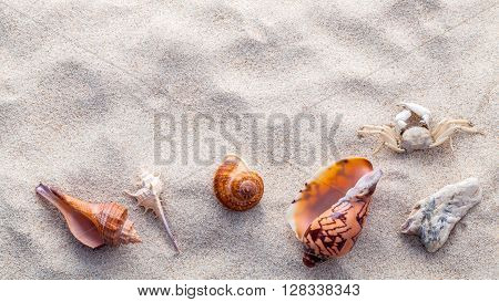 Sea Shells,starfish And Crab On Beach Sand For Summer And Beach Concept. Studio Shot Beach Backgroun