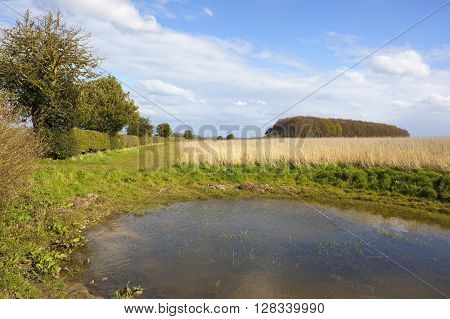 a small farm pond in the corner of a field with a hawthorn hedgerow under a blue sky in springtime