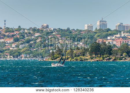 Sydney Australia - November 9 2014: Yacht boat sailing in the Sydney Harbour with Shark Island in the foreground Rose Bay and houses in the background at Sydney Australia.