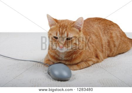 Cat In Control Of A Pc Mouse