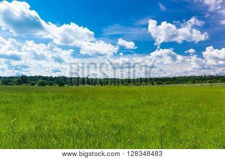 Plain Nature Vibrant Springtime