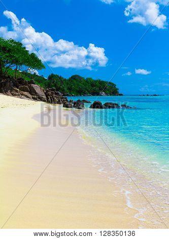 Paradise Exotic Dream