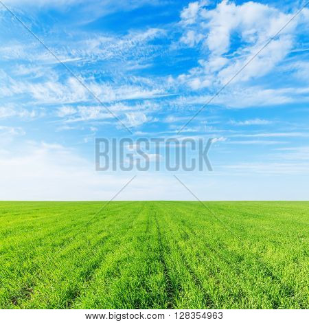 agriculture green grass field and blue sky with clouds over it
