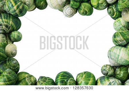 Colorful Green Snail Shells Frame Isolated on White Background
