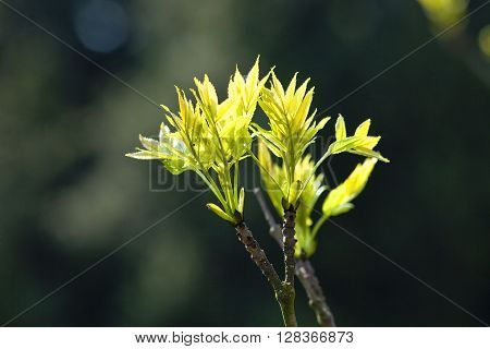 Closeup of a Tree Growing in Spring