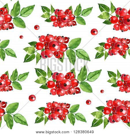 Watercolor summer insulated rosehips pattern on white background