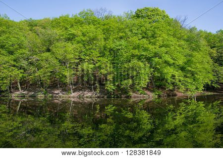 ladscape: green trees in forest reflecting in water of pond in sunny day