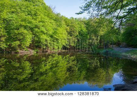 landscape: green trees in forest reflecting in water of pond in sunny day