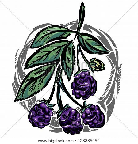 A stylized vector illustration of a dewberry branch in a frame.