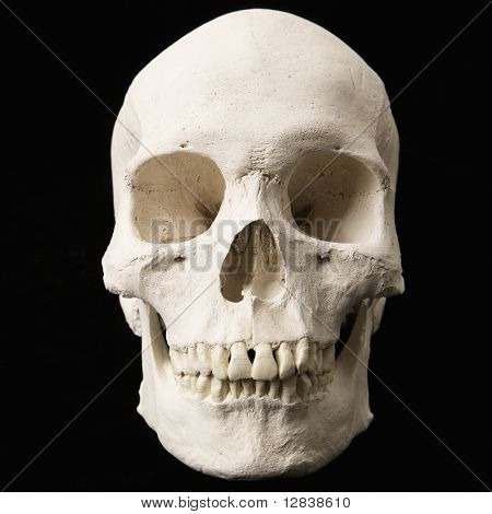 Human skull with teeth on black.