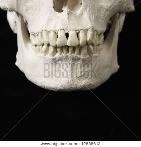 Close up of human teeth on skull on black.