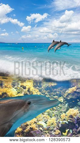 seascape with turquoise sea, underwater and jumping dolphins