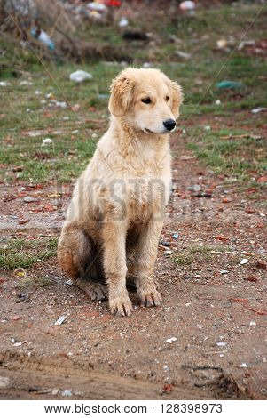 picture of a wet stray white dog