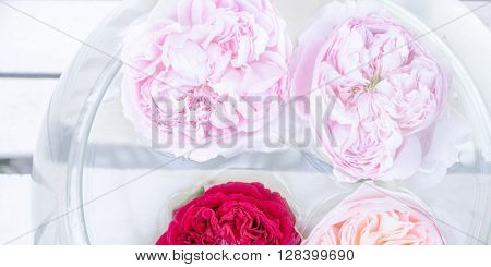 White Soft background with roses in the water. Fresh roses in a bowl of water in pastel color horizonatel background