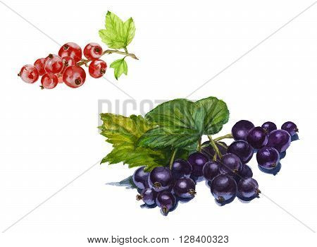 currant on a branch with leaves. set of red and black currant isolated. Watercolor