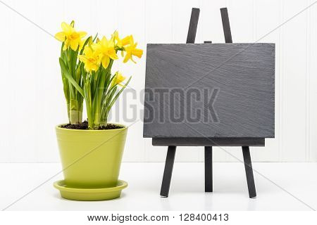 Spring daffodils and a blank slate suitable for including your own message.