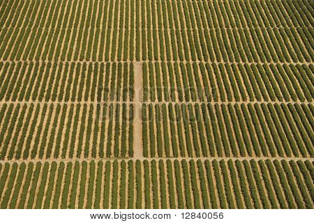 Aerial view of farmland with rows of crops.