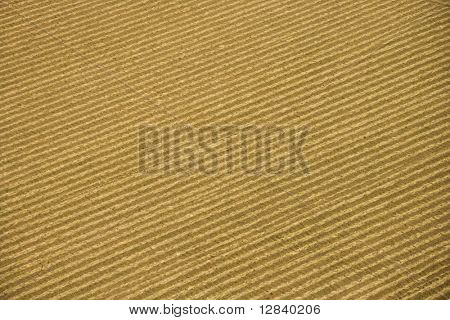 Aerial of rows in agricultural cropland.