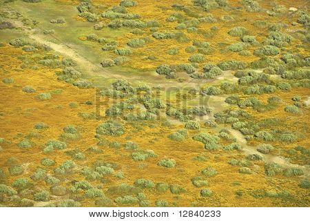 Aerial of green grassland and low growing shrubs with path in rural California, USA.