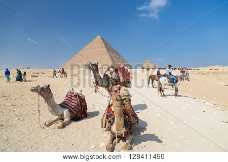 CAIRO, EGYPT - FEBRUARY 3, 2016: Camels for rent in front of the Great Pyramid of Giza.