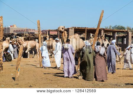 DARAW, EGYPT - FEBRUARY 6, 2016: Local camel salesmen on Camel market.