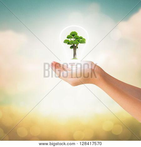 Hands Of Little Girl Holding Bonsai Tree