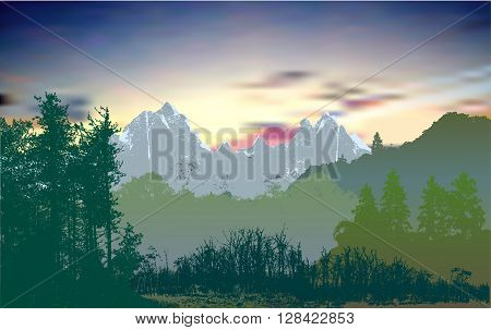 Wild mountain panoramic forest landscape with evergreen trees, plants and grass