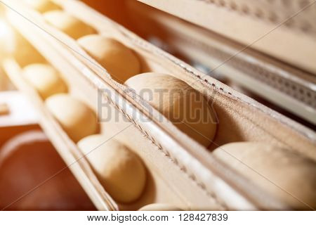 Private bakery. Bread oven. Production of bread. Bread baking in the oven. Workshop of making bread. Bakery at the bakery factory.