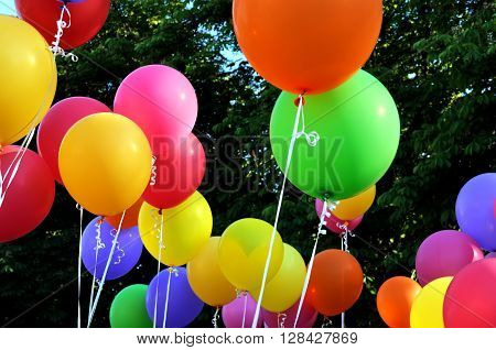 multicolored balloons in the city festival on trees background
