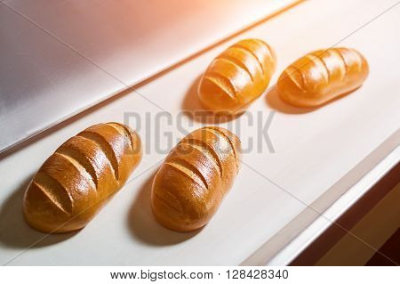 Conveyor with bread. Confectionery factory. Fresh bread from the oven. Transportation of bread.