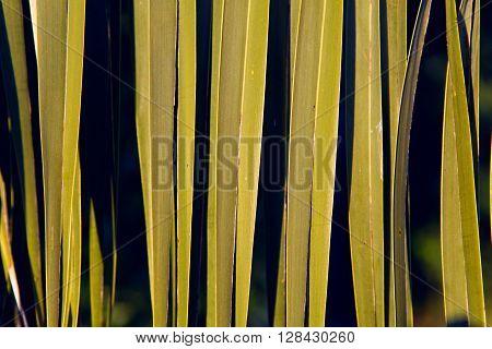 A closeup of a palm tree leaf.