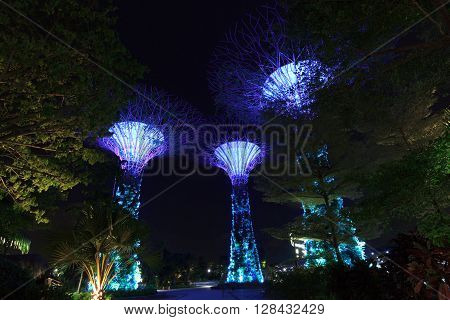 Singapore, Singapore - January 14, 2016: Supertree grove at night in Gardens by the Bay. Supertrees are tree-like structures that dominate the Gardens landscape. Gardens by the Bay is a park in central Singapore.