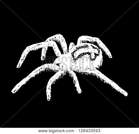 Illustration of cross spider Araneus. Vector illustration.