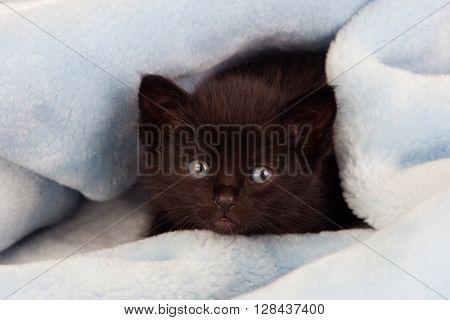 Small black kitten lying on a blue blanket