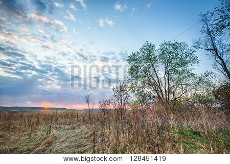 Sunrise HDR landscape in field and trees
