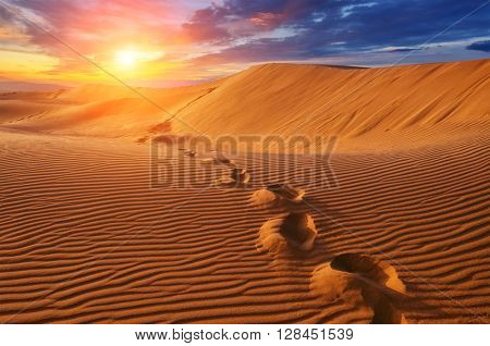 amazing desert view in sunset time