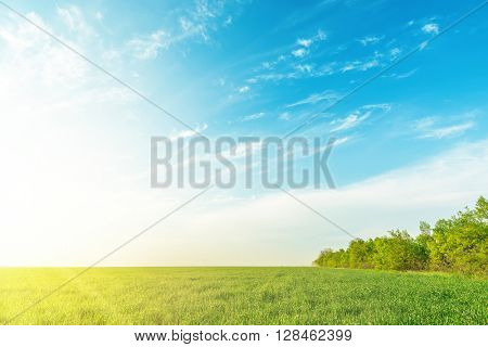 green grass field and trees under sunset in blue sky with clouds