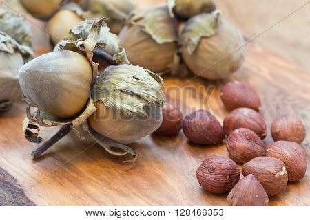 Hazelnuts Cluster Filbert Nuts In The Hard Shell.