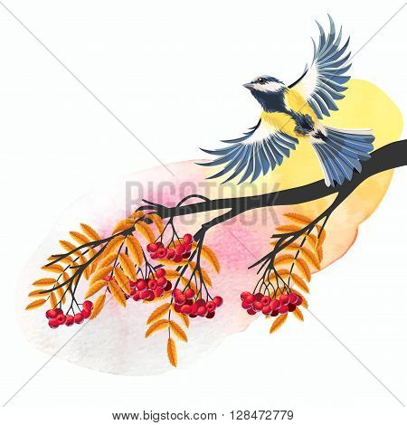 Vector illustration of flying tomtit and rowan branch
