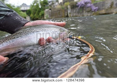 Closeup of rainbow trout caught in river