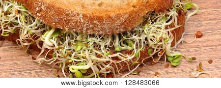 Slice of fresh baked wholemeal bread with alfalfa and radish sprouts on wooden surface concept of healthy lifestyle diet food and nutrition