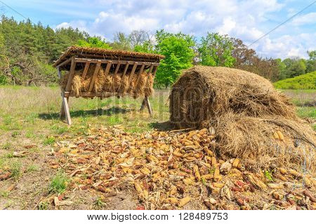 feeding-rack with dry hay and corn for wild animal on meadow in forest