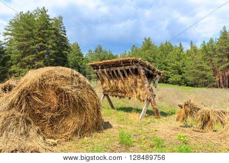 feeding-rack with dry hay for wild animal in forest