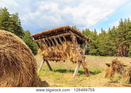 feeding-rack with dry hay  on meadow in spring forest