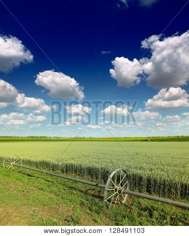 Green Wheat field and  clouds
